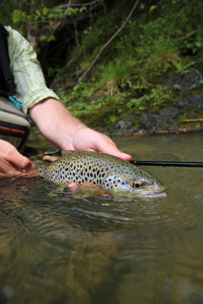la pêche de la truite dans les Pyrénées, La pêche dans les Pyrénées