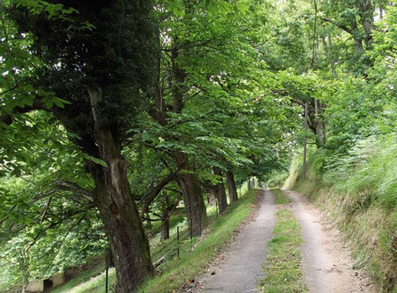 promenades à Saint-Pé de bigorre Circuit n°8 LENGOUS & MONTAGNOU